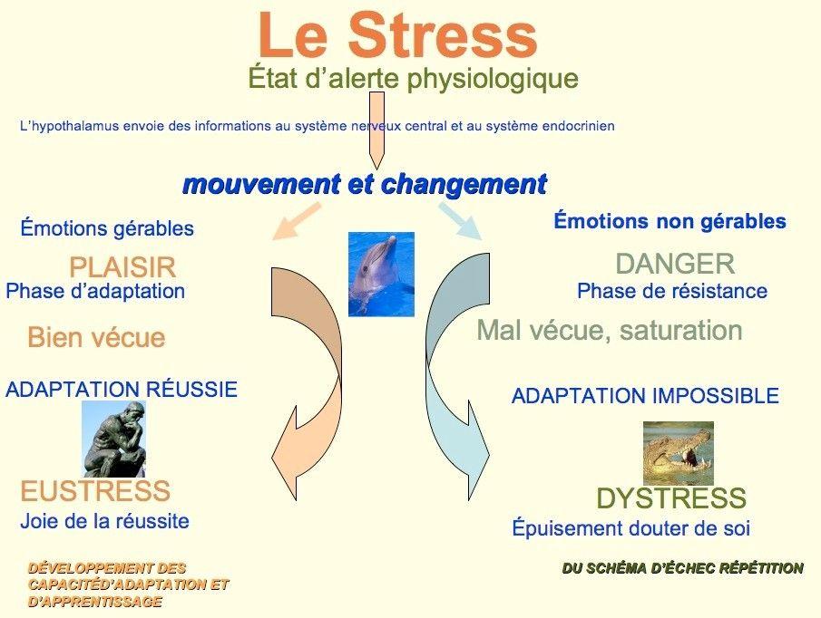 Pas de perf sans stress par amandine le cornec boutineau for Le stress