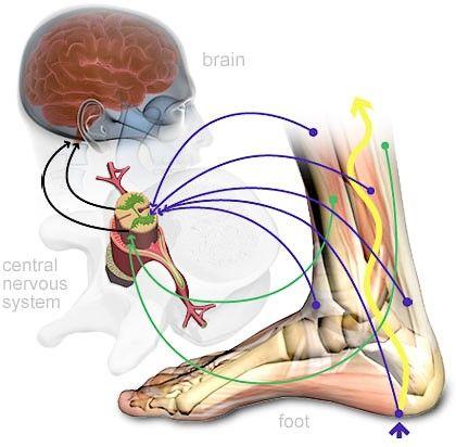 mouvements neurosensoriels