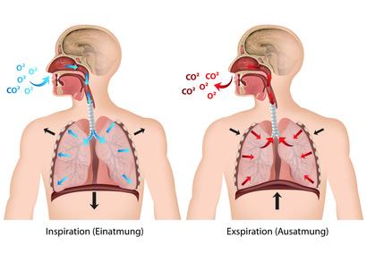 Atmung des Menschen